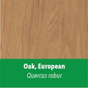 Oak,European